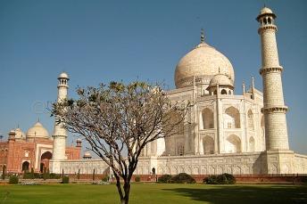 Tree at Taj Mahal