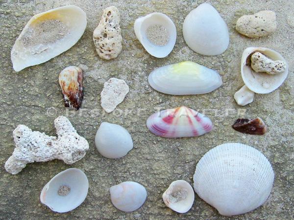 turks_shells