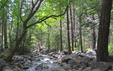 yosemite_wooded_stream
