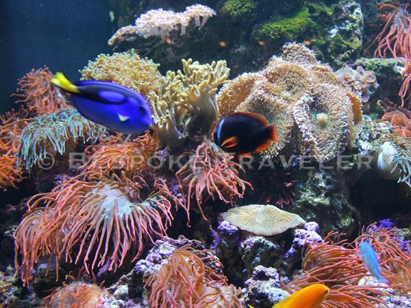 Diving Reef