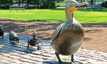 Boston Little Ducklings