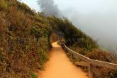 Big Sur Trail