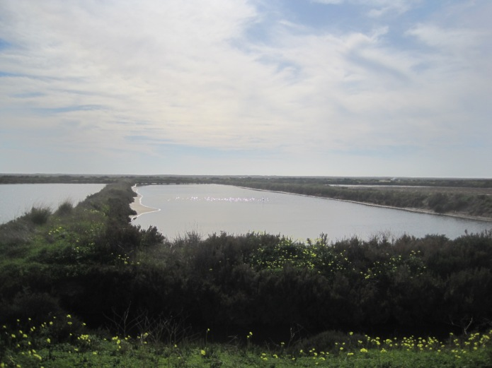 Salt marshes - Photo courtesy of Restless Jo