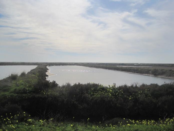 Salt marshes - Photo courtesy of Restless Jo