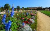Versailles Flowers