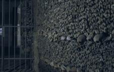Paris catacomb bones
