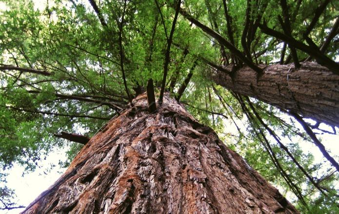 zip-line tree