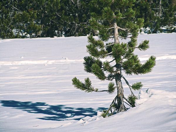 snowhsoe-trail