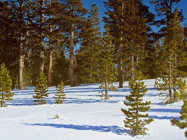 snowshoe-scene