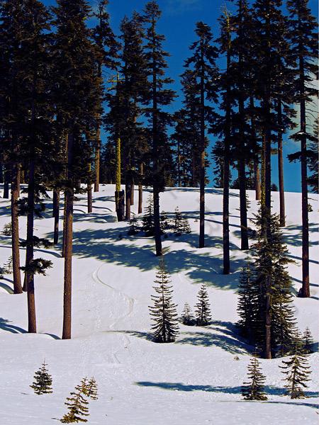 snowshoe-trees