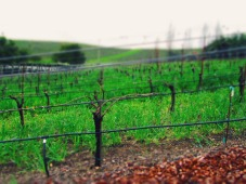 napa-vineyard