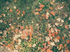 autumn-ground