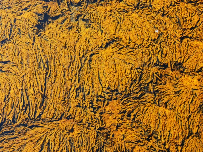 Yellowstone-detail