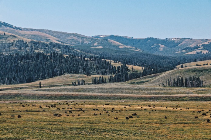 Yellowstone-valley