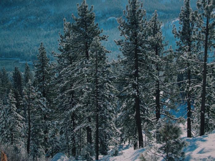 Winter-scape