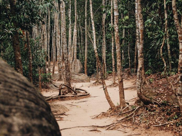 Kbal-Spean-trees