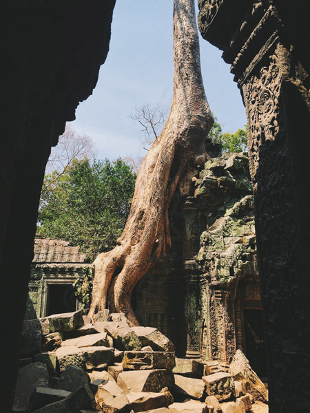 Siem-Reap-tree