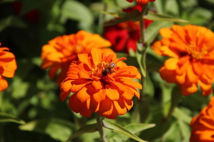 Garden-bee-BT