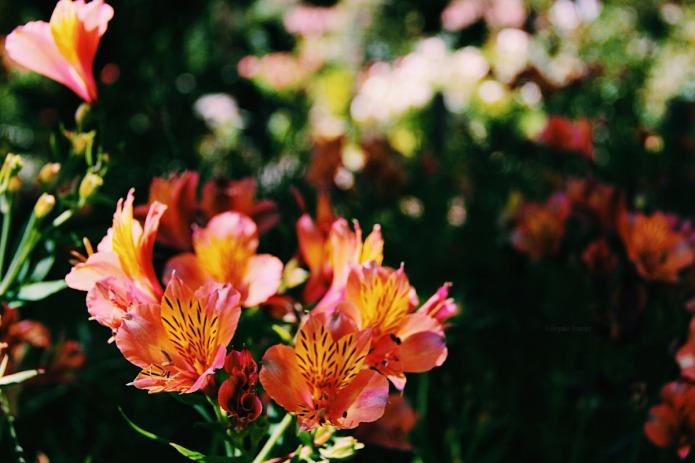 Garden-flower-BT