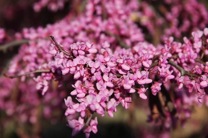 Garden-purple-BT