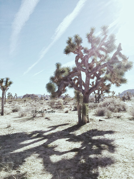 JoshuaTree-shadows-BT