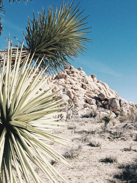 JoshuaTree-spikes-BT