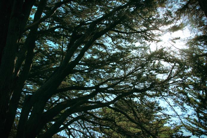 Pt-Reyes-trees-BT