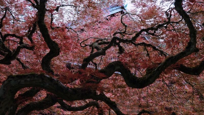 Japanese Garden - BT