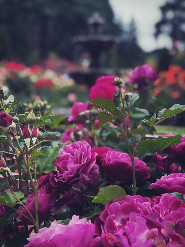 Rose Garden - BT