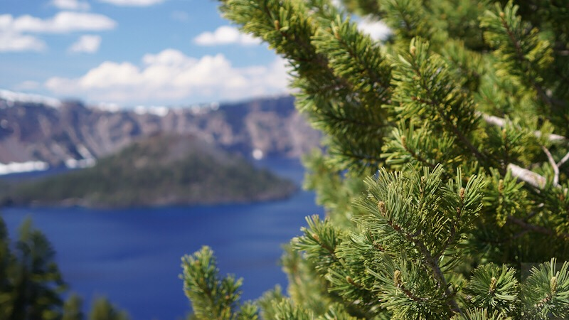 A bit of blue Crater Lake seen next to closeup of evergreen branch